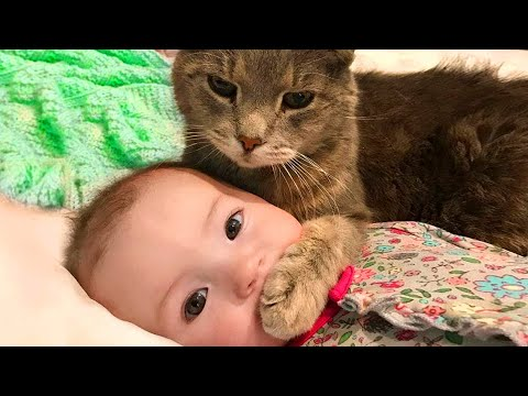 Baby and Cat Fun and Fails – Funny Baby Video