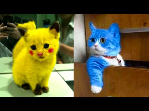 Baby Cats – Cute and Funny Cat Videos Compilation #14 | Aww Animals
