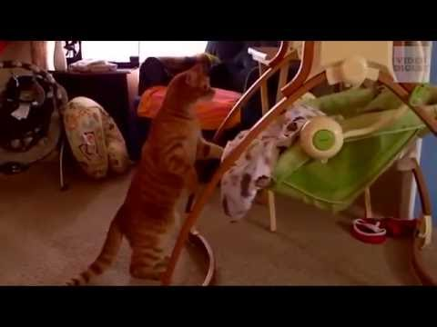Cats Acting Like Humans! Funny Cat Compilation