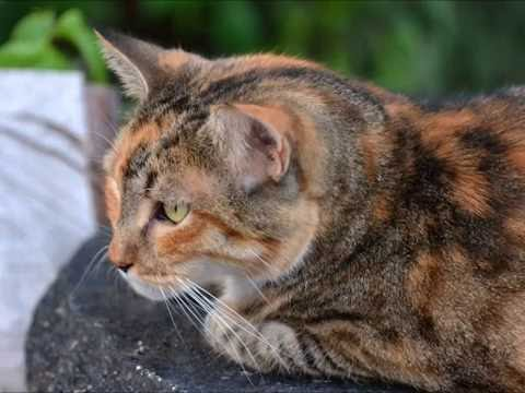 Cats That Looks Suspicious and Guilty Compilation