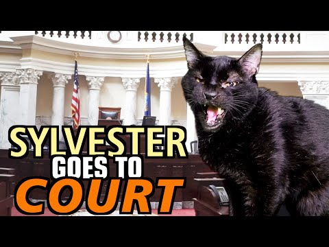 Talking Kitty Cat 69 – Sylvester Goes To Court